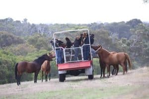 Horses Kangaroo Tour Margaret River